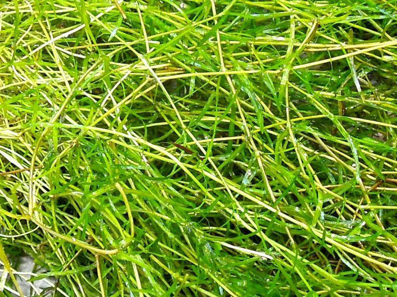naja_grass_closeup_001_768x1024