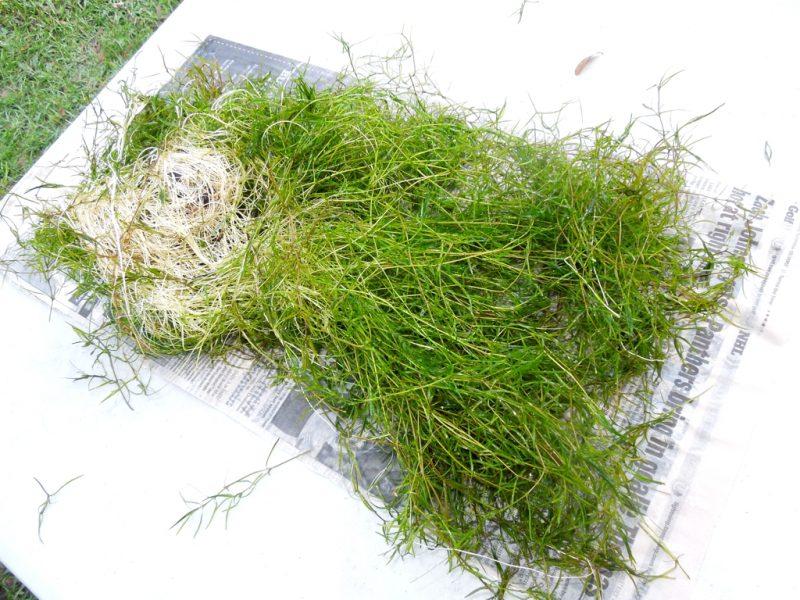 naja_grass_portion_001_768x1024